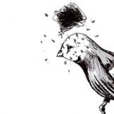 Oiseau peiné Essi